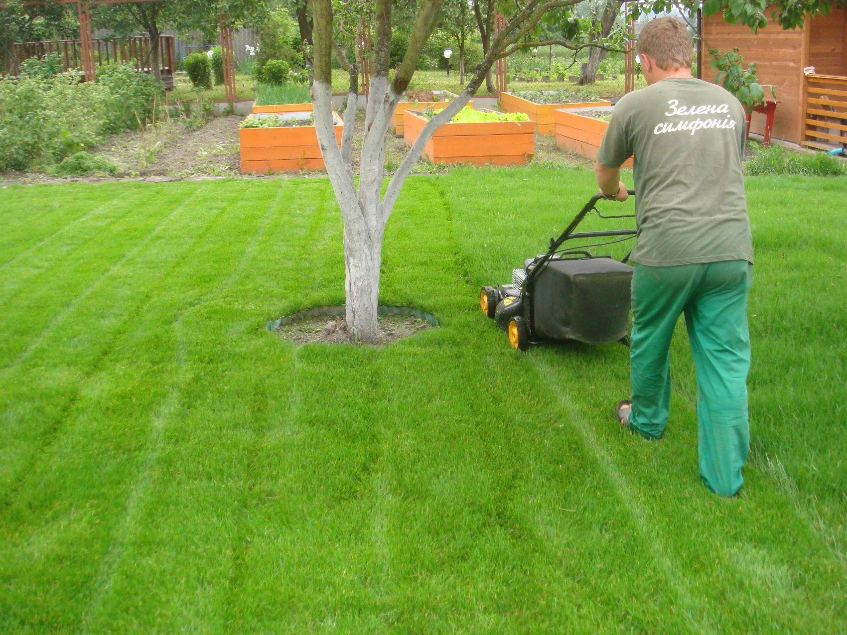 Подготовка участка под газон и посев травы своими руками 17