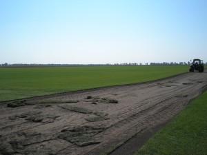 Красивые рулонные газоны в Киеве